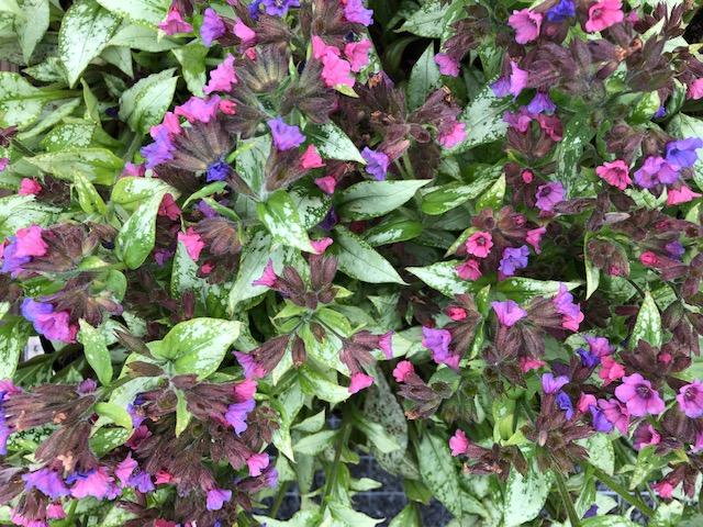 Plant Availability Colonial Nursery